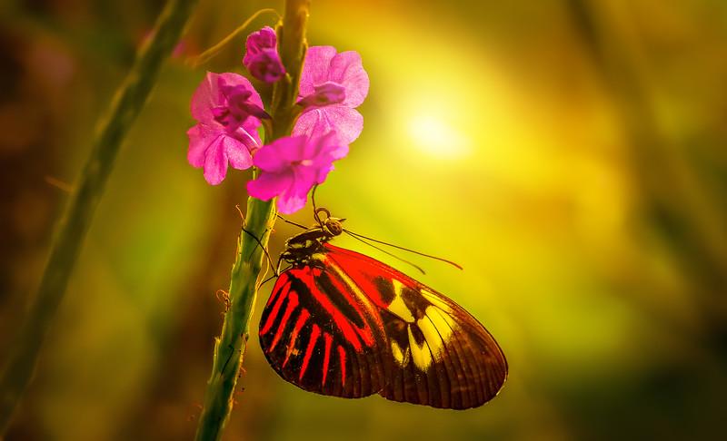 Butterfly-185.jpg