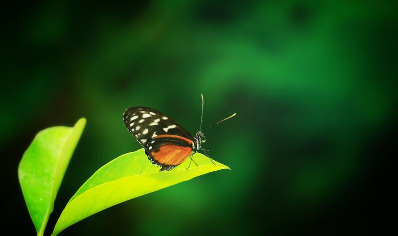 Butterfly-050.jpg