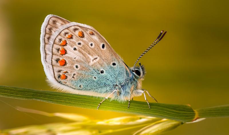 Butterfly-077.jpg