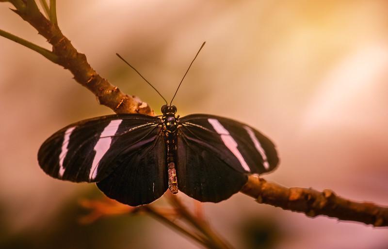 Butterfly-202.jpg