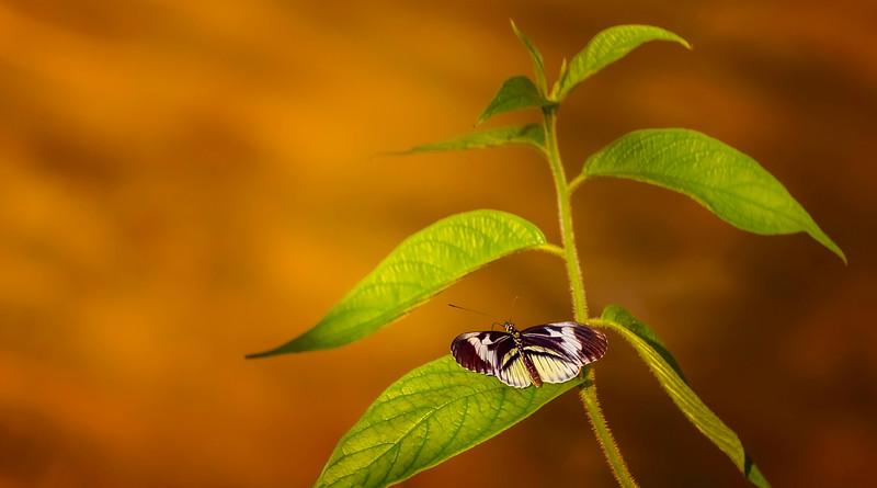 Butterfly-162.jpg