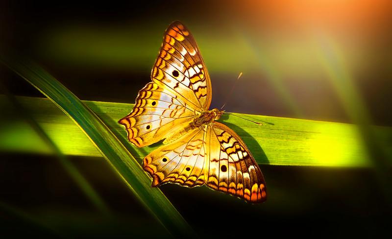 Butterfly-092.jpg