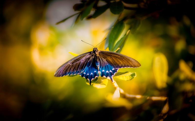 Butterfly-114.jpg