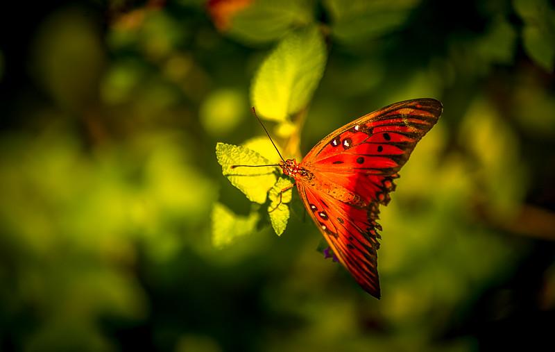 Butterfly-170.jpg
