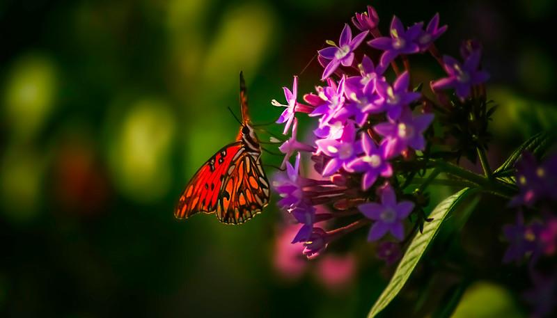 Butterfly-112.jpg