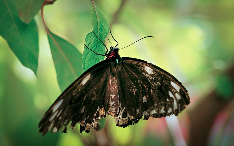 Butterfly-212.jpg