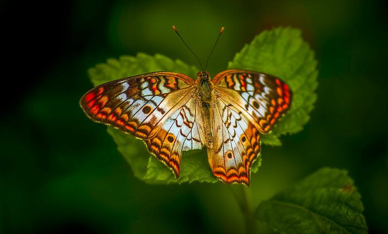 Butterfly-105.jpg