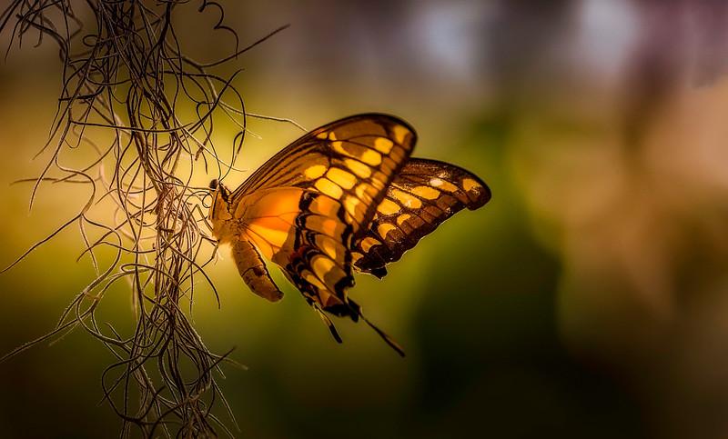 Butterfly-008.jpg