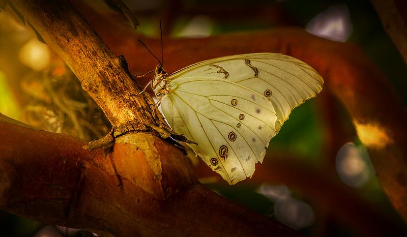 Butterfly-184.jpg