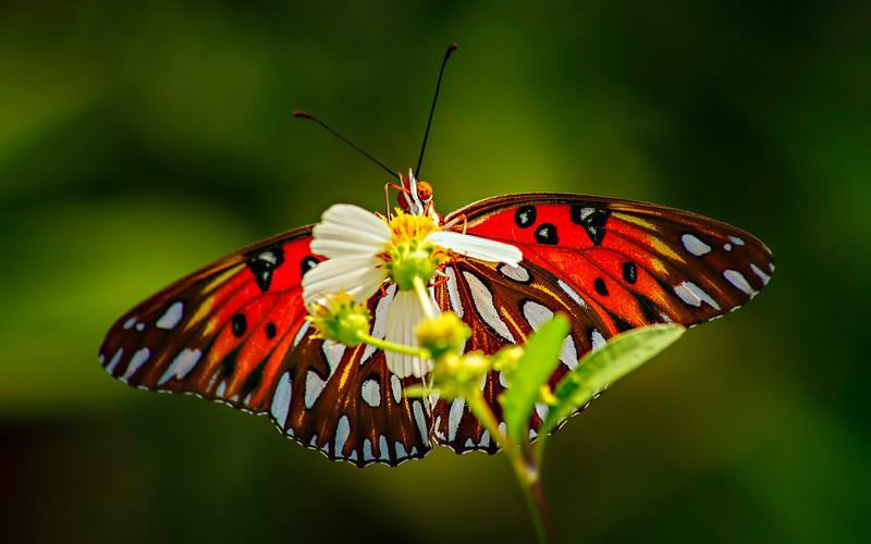 Butterfly-151.jpg