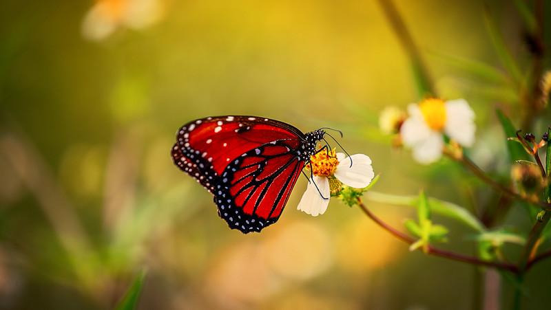 Butterfly-174.jpg
