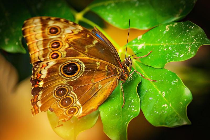 Butterfly-214.jpg