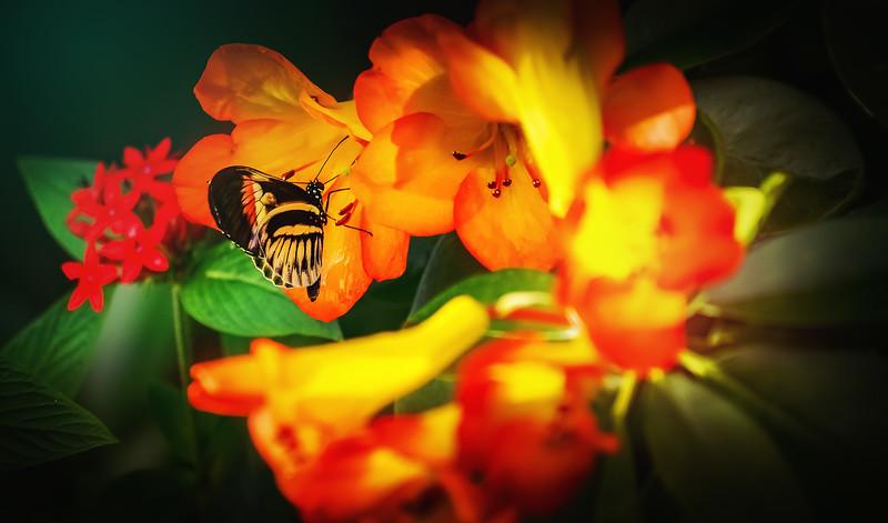 Butterfly-217.jpg