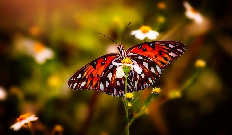 Butterfly-090.jpg