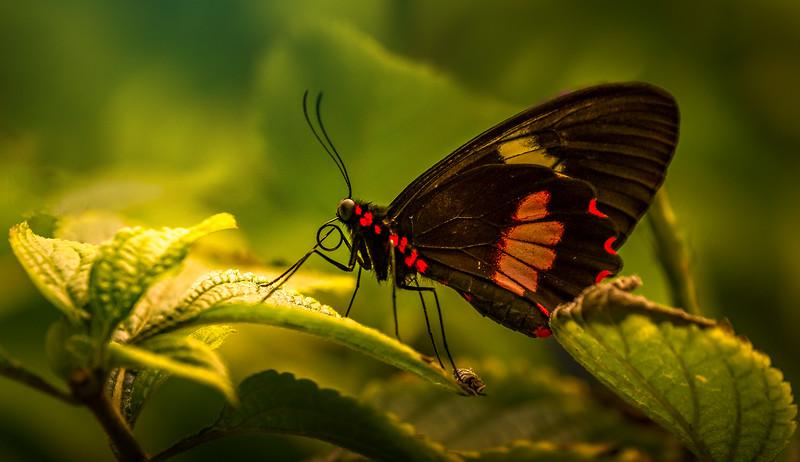 Butterfly-218.jpg
