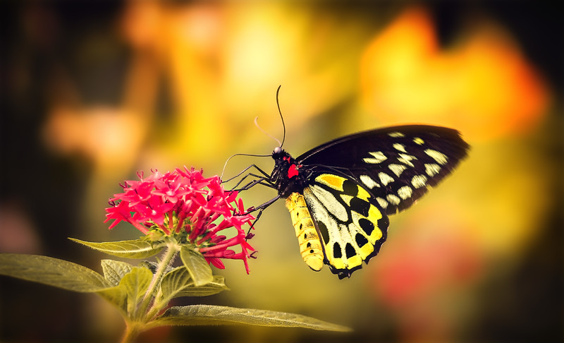 Butterfly-204.jpg