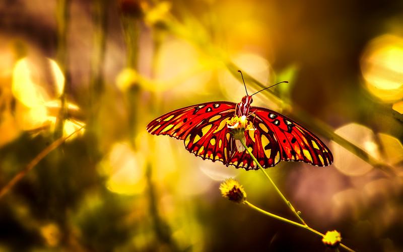 Butterfly-068.jpg
