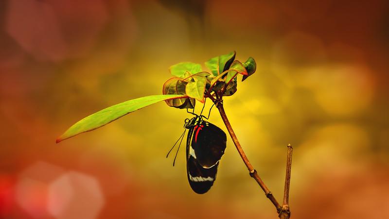 Butterfly-030.jpg