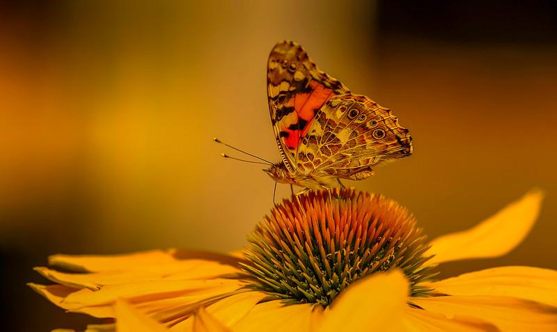 Butterfly-136.jpg