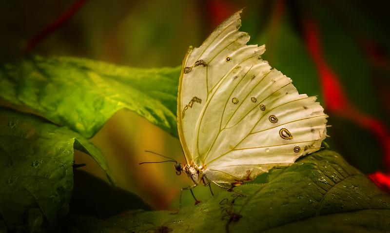 Butterfly-058.jpg