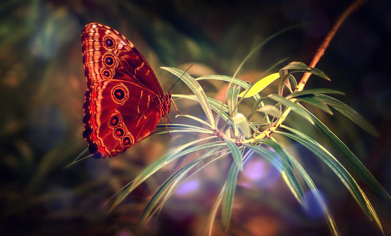Butterfly-194.jpg
