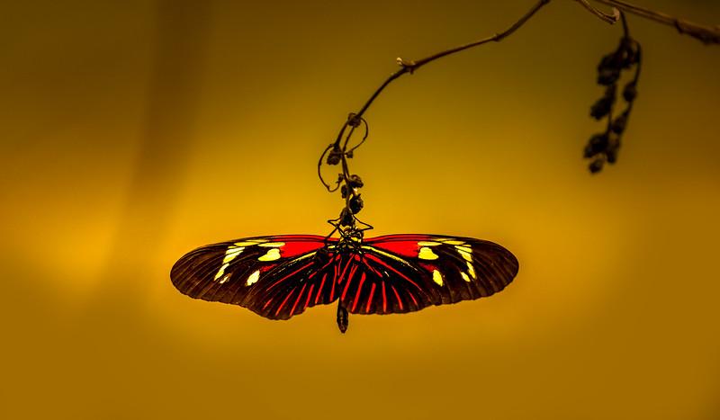 Butterfly-019.jpg