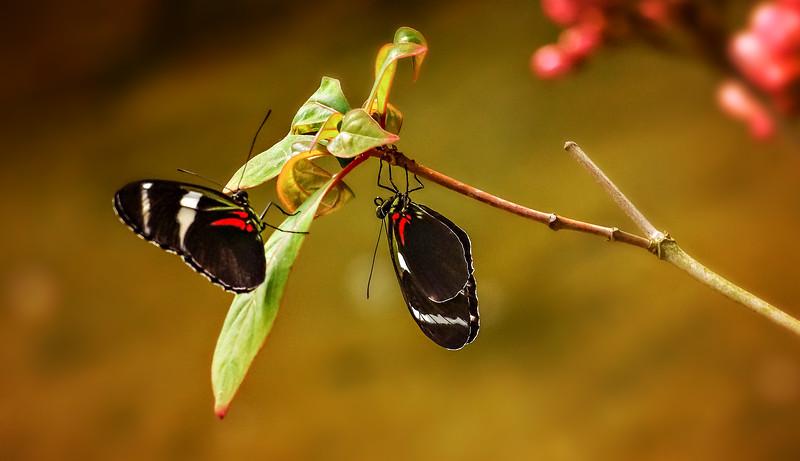 Butterfly-044.jpg