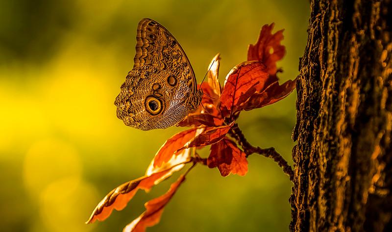 Butterfly-131.jpg