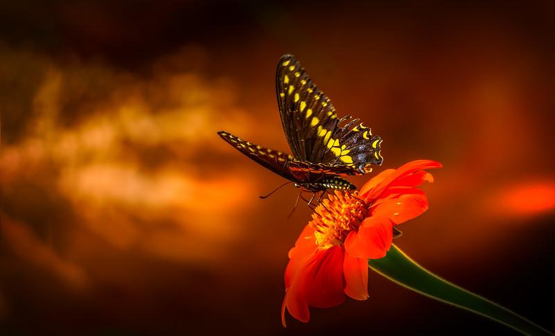 Butterfly-060.jpg