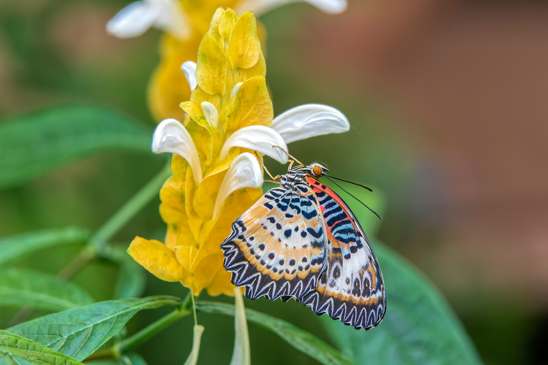 Butterfly 69A3740