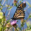 butterfly              5 fbjpg