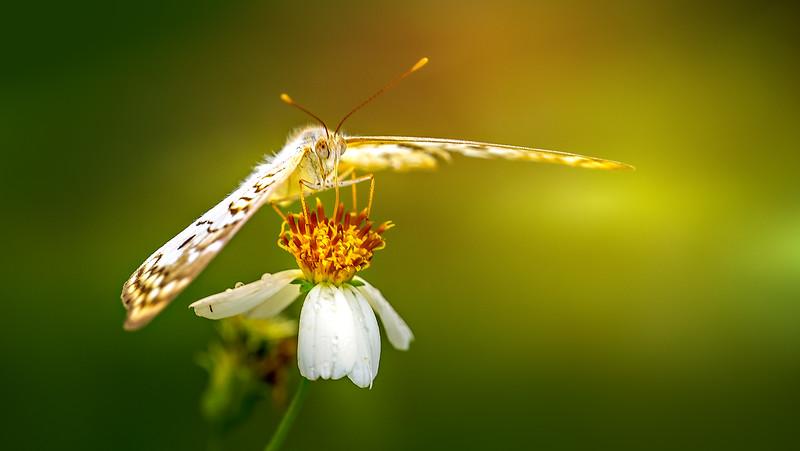 Butterfly-176.jpg