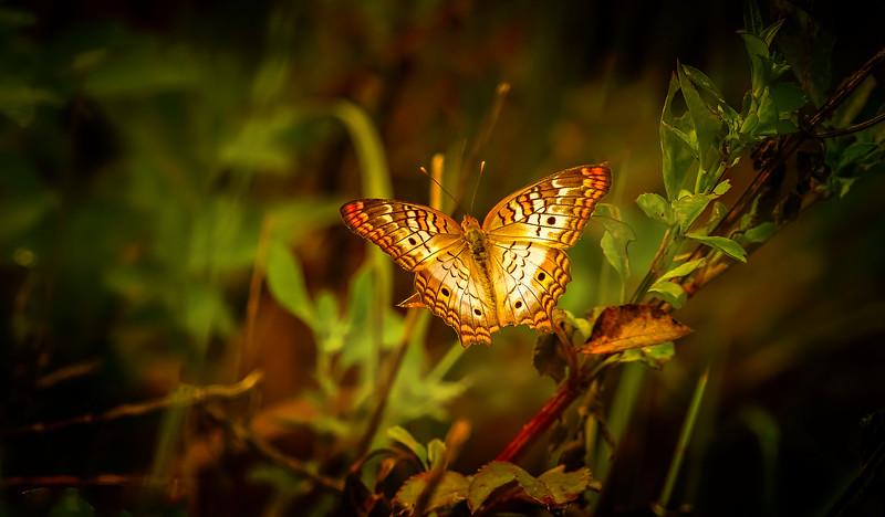 Butterflies-001.jpg