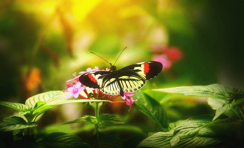 Butterfly-197.jpg
