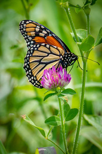 Monarch Macro 2