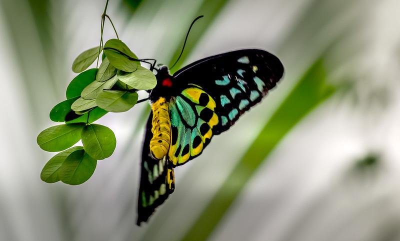 Butterfly-017.jpg