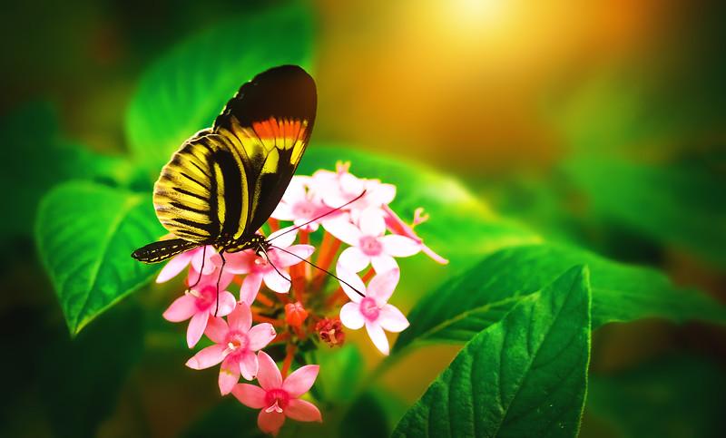 Butterfly-199.jpg