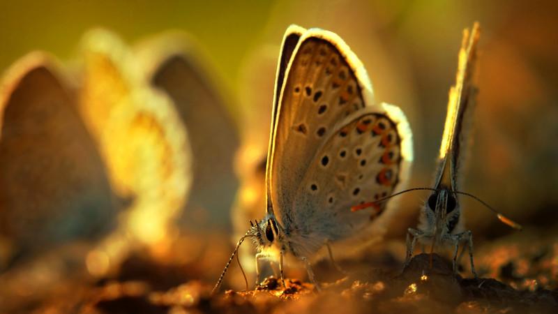 Butterfly-096.jpg