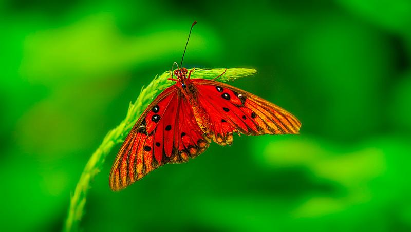 Butterfly-006.jpg