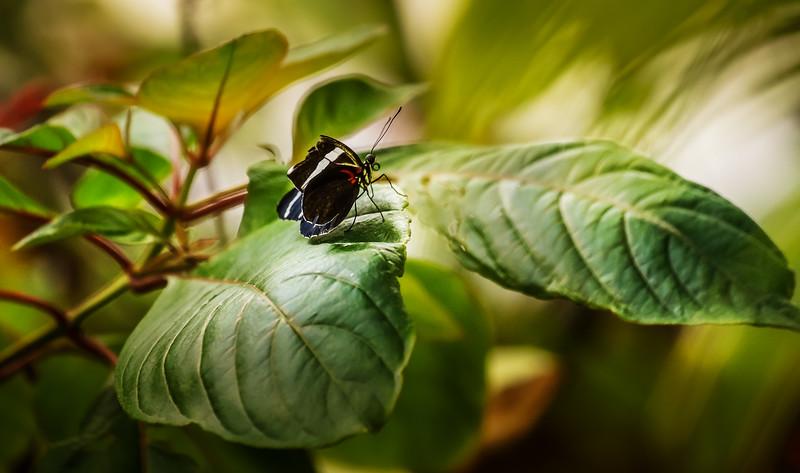 Butterfly-034.jpg