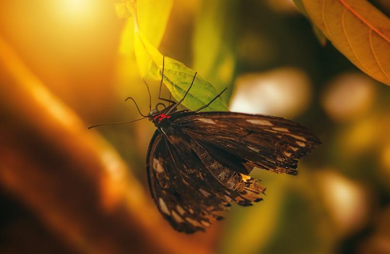 Butterfly-213.jpg