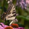 Butterfly E4A6244