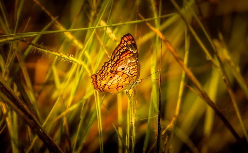 Butterfly-155.jpg