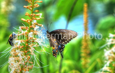 Butterfly and the Bee . . .