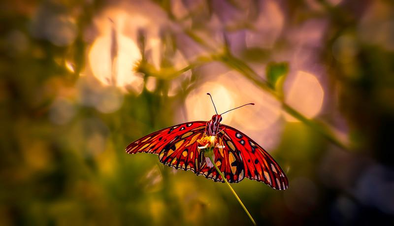 Butterflies-015.jpg