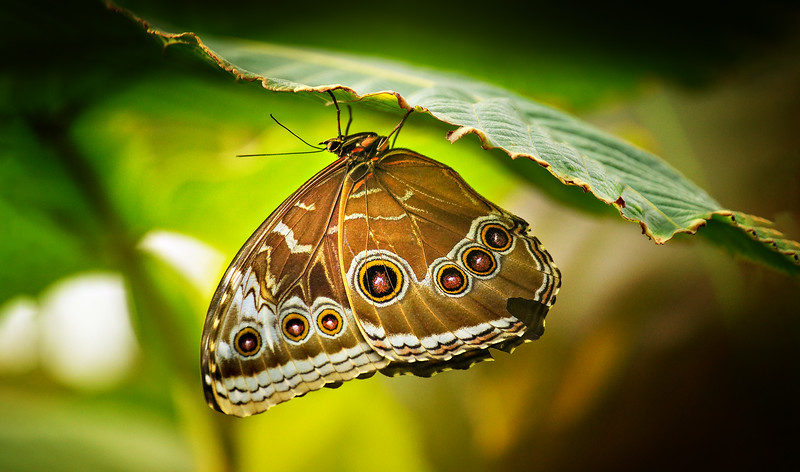 Butterfly-220.jpg