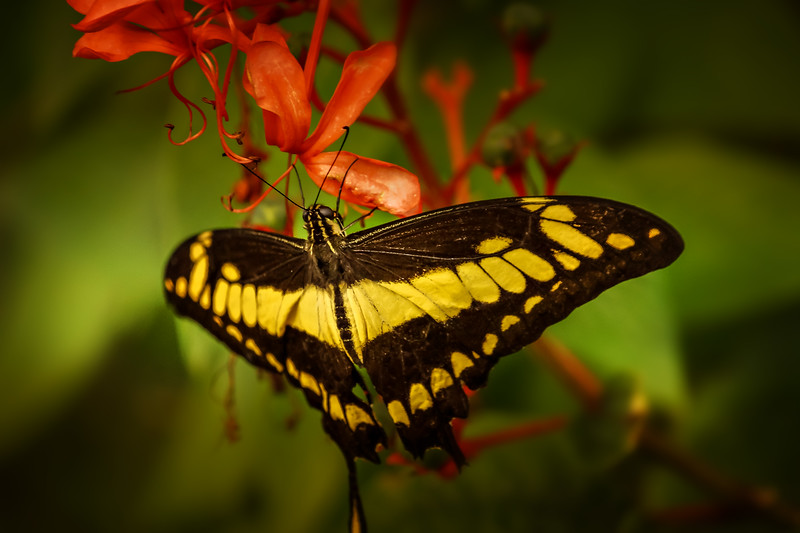 Butterfly-003.jpg