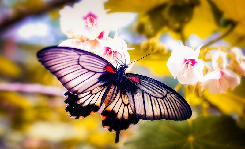 Butterfly-084.jpg