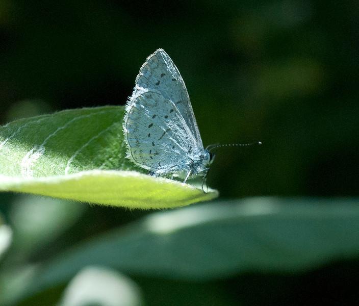 Echo azure