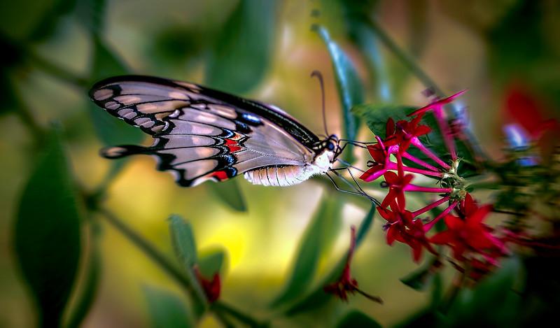 Butterfly-146.jpg